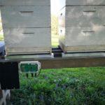 Wiegen Sie Ihren Bienenstock mit einer Bienenstockwaage
